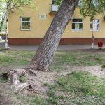 МФЦ на Советской, 55: кто и когда приведет в порядок территорию?