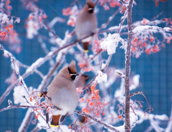 Четвертого апреля в Северодвинске откроется фотовыставка «Природа Севера»